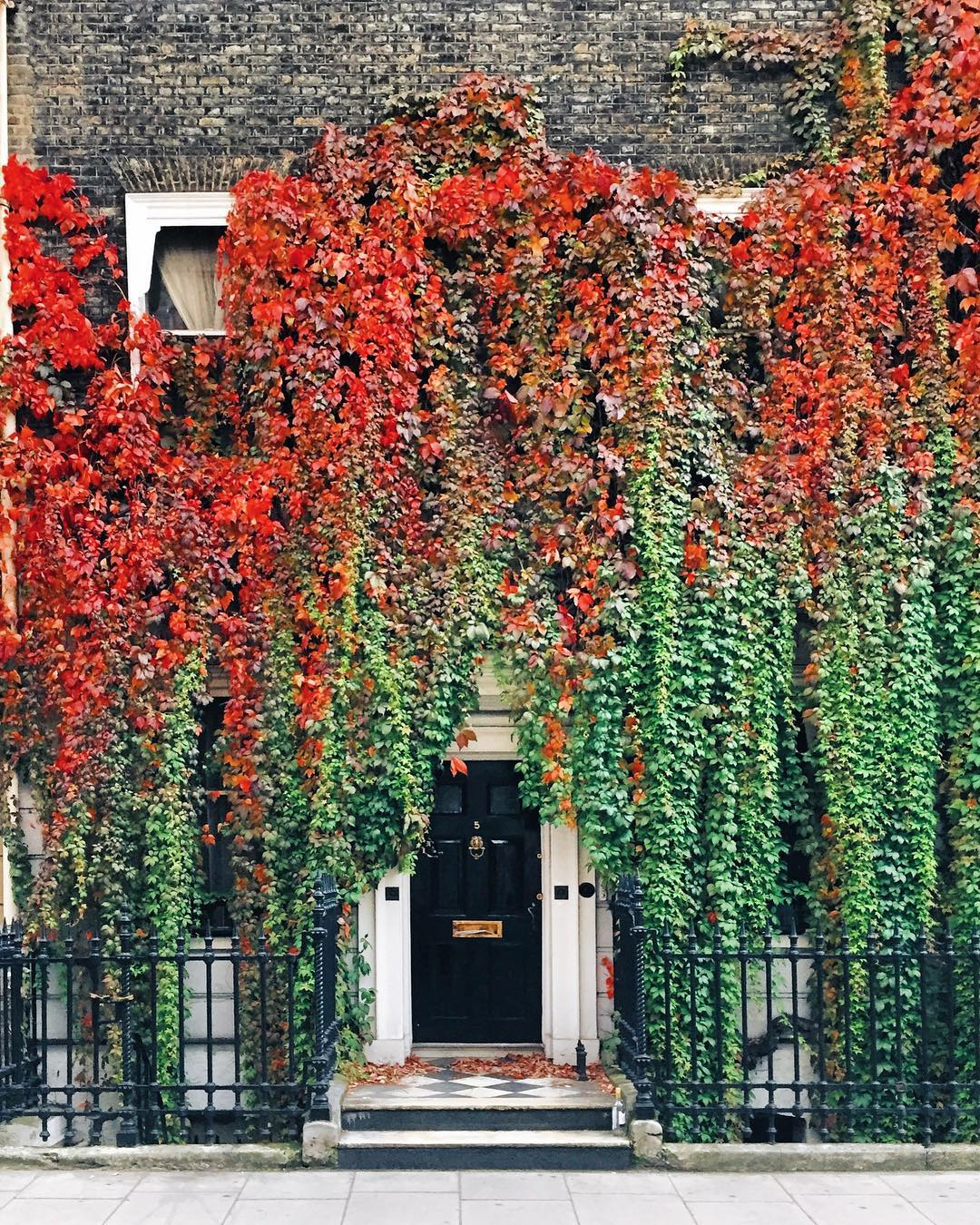 Autumn photo ivy door