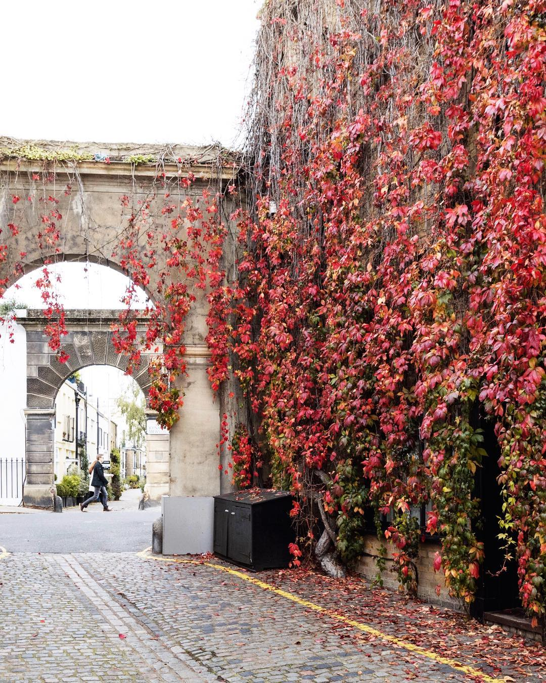 London autumn photograph, sparrowinlondon mews