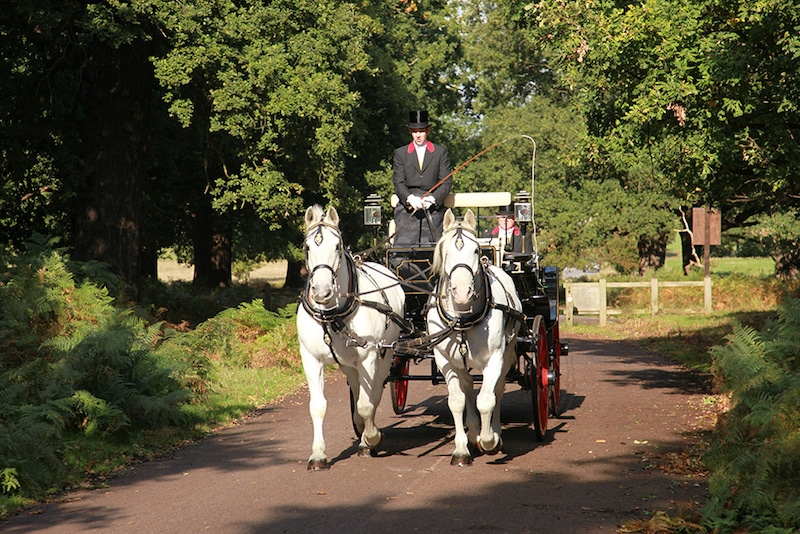 Richmond Park Horse and Carriage Ride