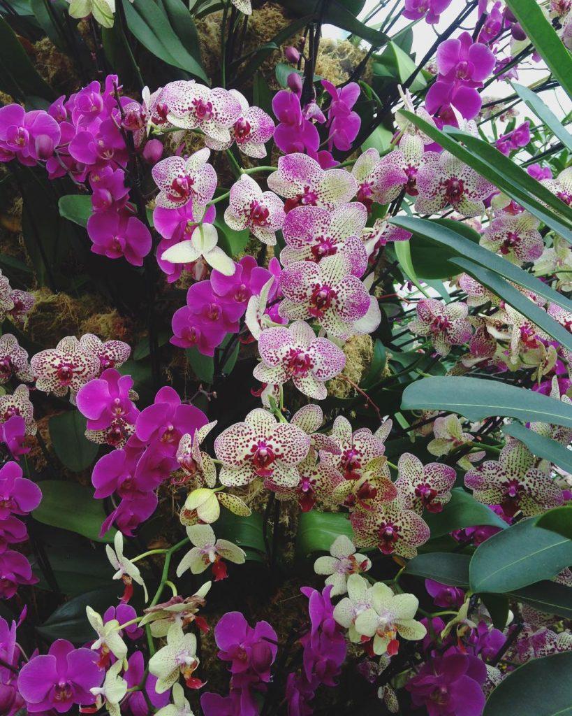 orchids-9