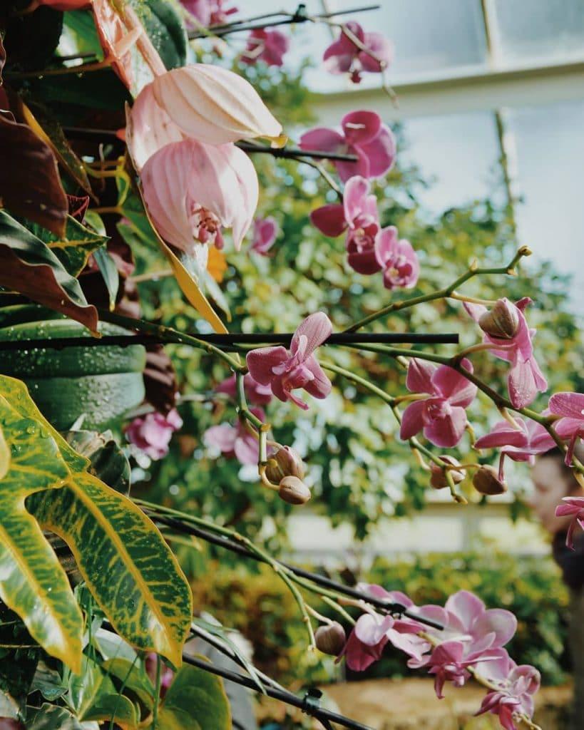 orchids-13