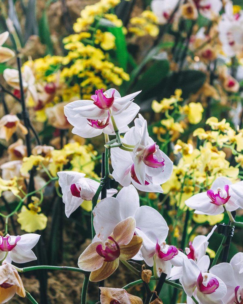 orchids-12
