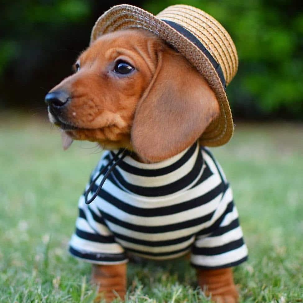 Puppy Brunch