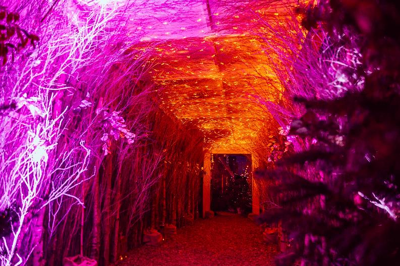 winterland-forest
