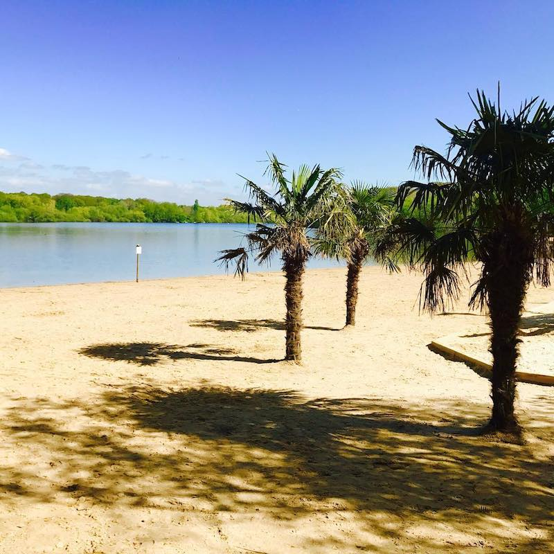 Ruislip Lido Palm Trees